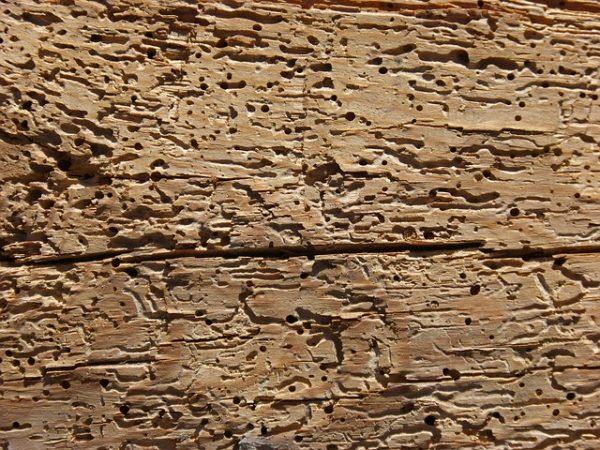 Tarli del legno